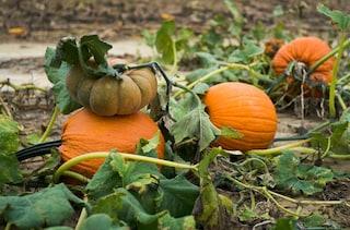 Perché Halloween è (ormai) anche la nostra festa