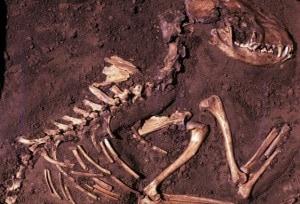 Uno degli scheletri utilizzati dai ricercatori