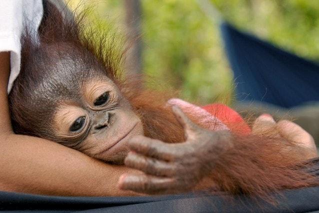 Sura contempla le dita amputate (Foto di Fondazione BOS)