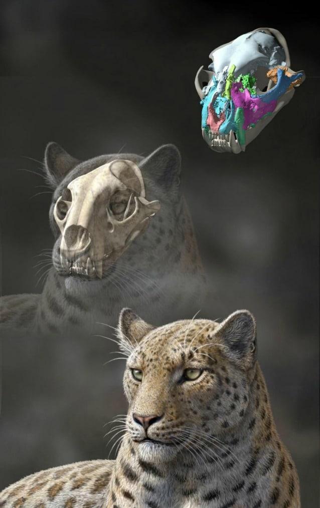 Elaborazione artistica (di Mauricio Anton) di quello che doveva essere l'aspetto di Panthera blytheae sulla base del cranio rinvenuto