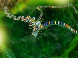 Manipolare il genoma?