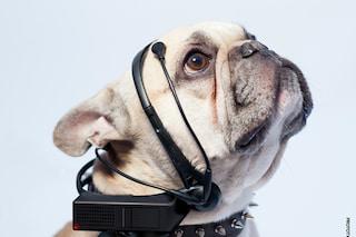Il dispositivo che fa parlare il tuo cane