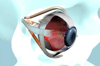 Il cervello può imparare a vedere di nuovo, dopo la cecità