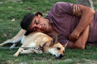 Cure e attenzioni, i resti di un cucciolo malato raccontano che amiamo i cani da 14.000 anni
