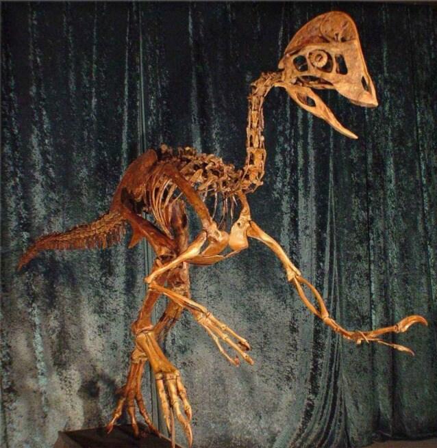 Ricostruzione dello scheletro di Aznu wyliei