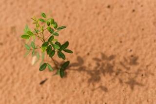 Oggi è la Giornata Mondiale della Biodiversità