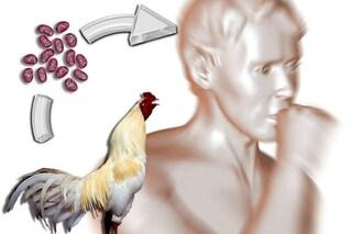 No, la nuova influenza aviaria H10N8 non è una minaccia globale imminente