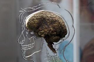 Ricercatori contro il cervello artificiale dell'Unione Europea