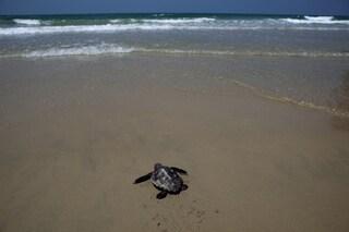 La tartaruga marina è tornata a deporre uova a Lampedusa