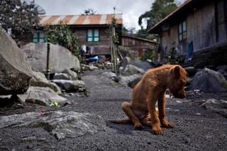 Cani e gatti abbandonati: cosa fare in caso di ritrovamento