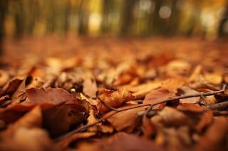 5 cose da sapere sull'Equinozio d'autunno