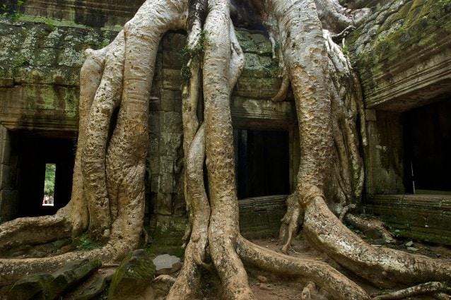 Particolare di Angkor, Cambogia