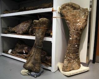 Lo scheletro di un dinosauro da record è stato scoperto in Patagonia