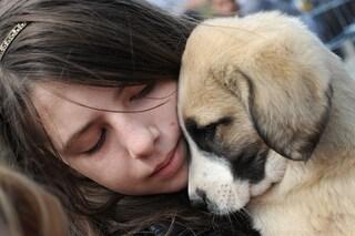 Hai mai detto al tuo cane 'ti ammazzerei di baci'? La scienza spiega 'l'aggressione tenera'