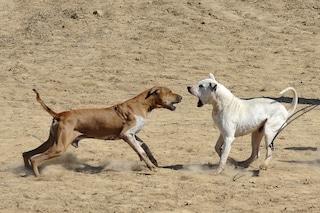 Cani e personalità: cosa si intende per cane dominante e non?