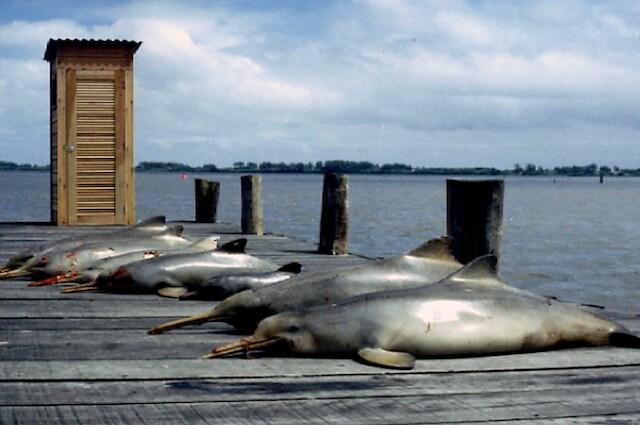 Una triste sorte attende i delfini