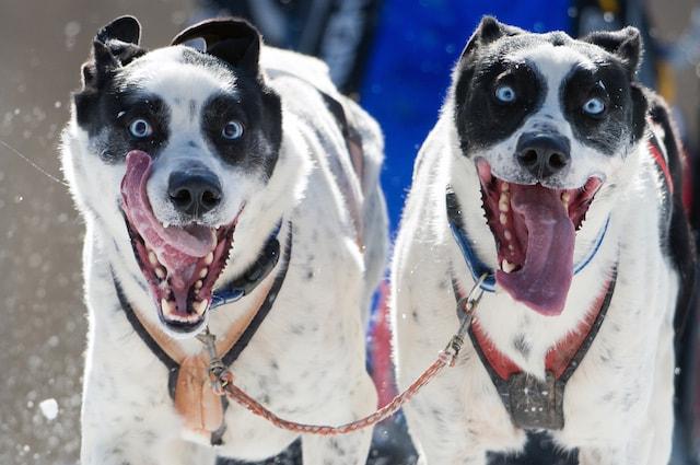 Un cane può leccarsi il naso quando una situazione non lo convince