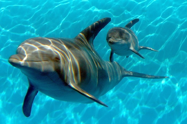 I delfini vivono in gruppo e comunicano tra loro