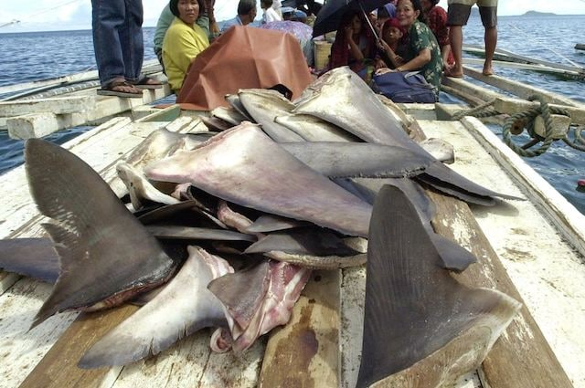 Pinne di squalo anti tumorali: verità o leggenda?