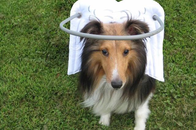 Disponibile in 9 taglie è adatto a tutti i cani