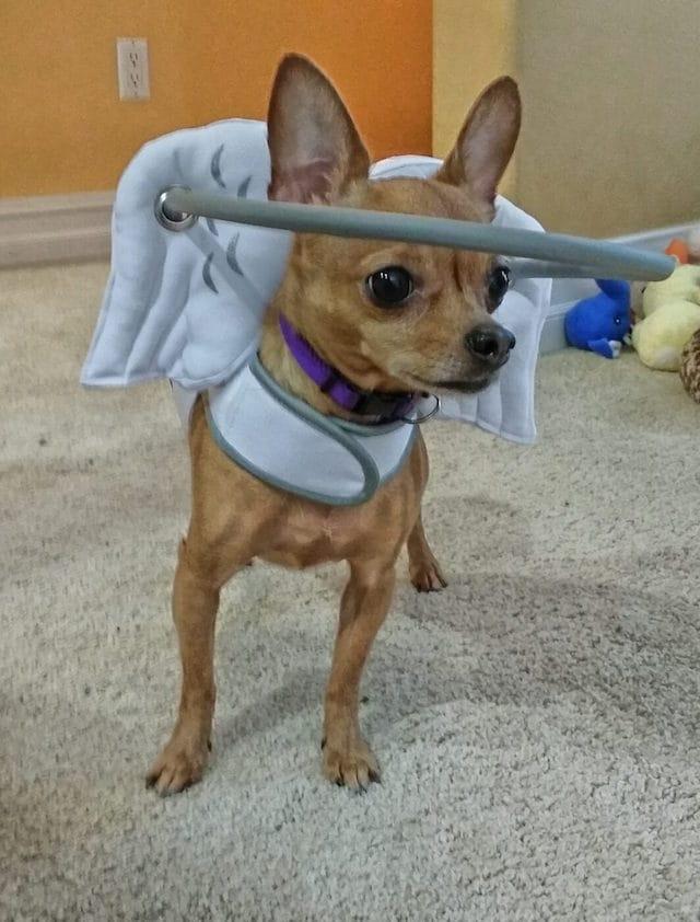 Purtroppo ci sono proprietari che abbandonano il loro cane quando diventa cieco