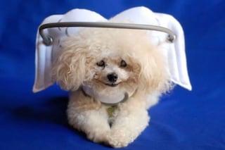 Il supporto che evita ai cani ciechi di farsi male