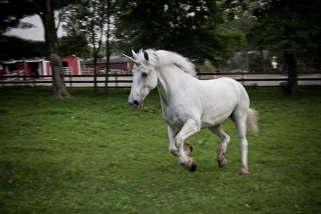 Cavallo con un finto unicorno