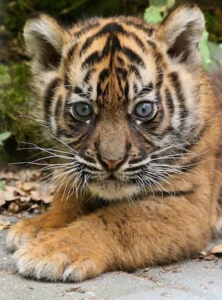 10 animali che stiamo uccidendo fino all'estinzione