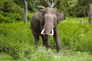 Allarme biodiversità, senza elefanti anche le piante si estingueranno