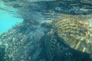 Gli atolli del Pacifico sono invasi dalla spazzatura