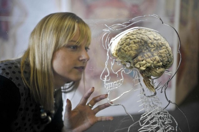 Brain exhibition in Bristol