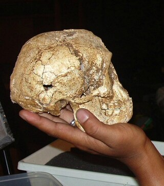 L'hobbit indonesiano? Probabilmente era un homo sapiens affetto da microcefalia