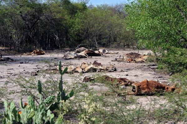 Il Gran Chaco è un ecosistema la cui biodiversità è minacciata dalla deforestazione, assieme al suo popolo autoctono