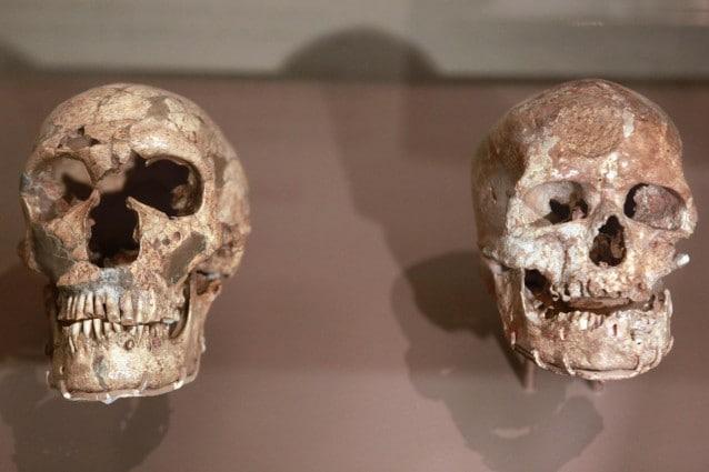 Il successo evolutivo della nostra specie non è riconducibile ad un solo elemento. Una recente ricerca, ad esempio, ha sottolineato come anche i bulbi olfattivi dell'Homo sapiens, più sviluppati di quelli del Neanderthalensis, potrebbero aver giocato un ruolo chiave, assieme a numerosi altri fattori.