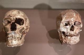 Homo Sapiens, i segreti di una fortunata evoluzione
