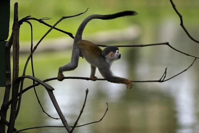 Il polmone del mondo, la Foresta Amazzonica, sta diventando sempre meno capace di tollerare i cambiamenti e, secondo alcuni scienziati, la sua resistenza sarebbe vicina al limite