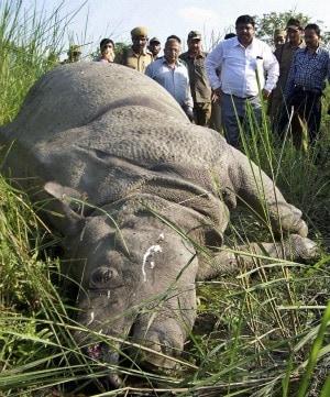 Uccisi a colpi di kalashnikov per essere privati dei loro corni, destinati a mercati clandestini dell'estremo oriente, è la prima volta che vengono ritrovati così tanti rinoceronti morti nella stessa giornata. Il 2012 si preannuncia un altro anno durissimo per la lotta al bracconaggio.
