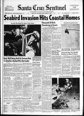 Come venne al regista l'idea di un film in cui gli uccelli attaccavano gli esseri umani Complici furono, sicuramente, il racconto di Daphne Du Maurier ed una strana moria di volatili che nel 1961 colpì la California.