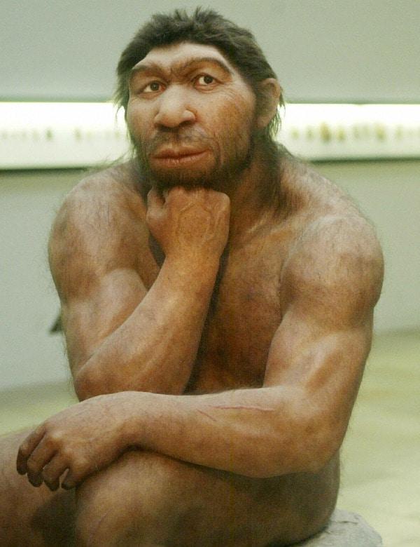 Il dibattito sulle ragioni che portarono alla scomparsa dei cugini Neanderthal  è sempre aperto tra studiosi ed esperti, tutti alla ricerca delle più antiche tracce del nostro passato di umani. Un recente studio propone l ipotesi della glaciazione come responsabile dell estinzione dei nostri  antenati .