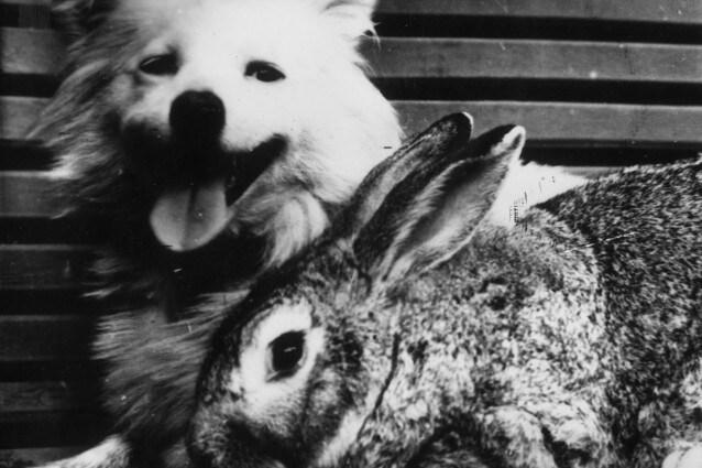 L'articolo 16, approvato nonostante le opposizioni in Aula di alcuni onorevoli, prevede vincoli sul recepimento della direttiva europea sulla vivisezione e porterà alla scomparsa degli allevamenti di cani, gatti e primati utilizzati per sperimentazioni. I canili lager come Green Hill chiuderanno.