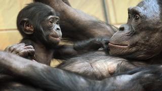110 scimmie liberate dopo anni di sperimentazioni