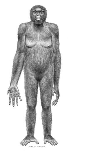 Quando il nostro diretto antenato Australopitecus Afarensis deambulava già perfettamente eretto si ritrovava a condividere lo spazio con altre specie di ominidi che ancora si arrampicavano sugli alberi. La recente scoperta di un fossile di piede fa luce su quel complesso processo che fu l evoluzione.
