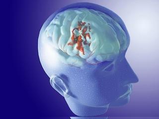 A Londra un viaggio attraverso il centro del nostro universo: il cervello