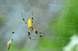 Il segreto della tela del ragno, conducibilità termica superiore al rame e al silicio