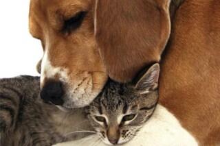Veneto, veterinario gratuito per gli animali delle persone povere