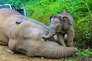 """Licenza da 70mila dollari per uccidere gli elefanti, la scelta dello Zimbabwe: """"Turismo crollato"""""""