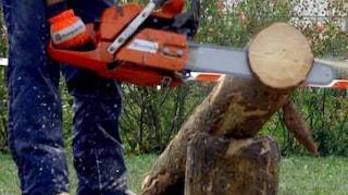 Foggia, nel bosco a tagliare la legna ma si ferisce con la motosega: Giuseppe muore a 49 anni