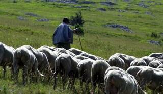 Casamassima, imprenditore agricolo arrestato per sfruttamento: pagava 1,80 euro all'ora i dipendenti