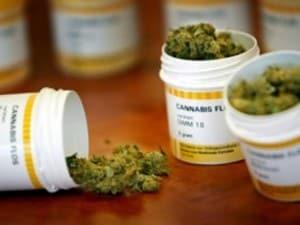 cannabis puglia uso terapeutico