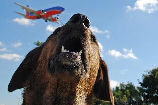 Come portare il cane in aereo